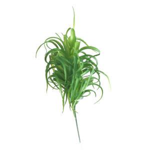 Aloe Crespo (25cm) - verde