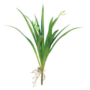 Folhas de Orquídea Cymbidium artificial com raiz (38cm)
