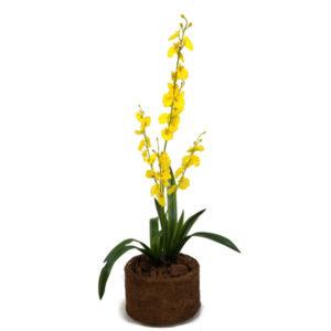 foto do arranjo de orquídeas chuva de ouro amarelo em vaso de fibra de coco