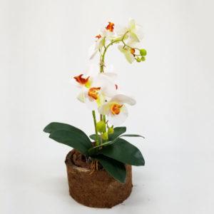 foto de arranjo floral de orquídeas cor branco/ocre em vaso fibra de coco